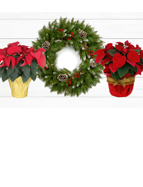 Wreath & Poinsettia Fundraiser